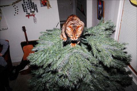 Санта Клаус есть и у нас